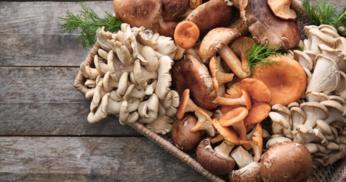 Produção de cogumelos cresce cada vez mais no Brasil