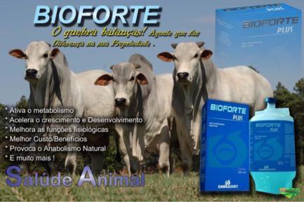 BIOFORTE ( SUPER ENGORDA ) QUEBRA BALANÇAS !