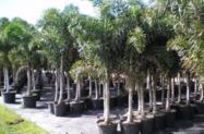 Mudas de Árvores Nativas Para Paisagismo e Reflorestamento