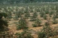plantio e manutenção de floresta plantada - DMB florestal