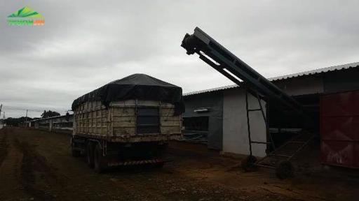Cama de frango a retirar...só adubo forte...ótimo preço..fornecemos o carregamento direto da granja