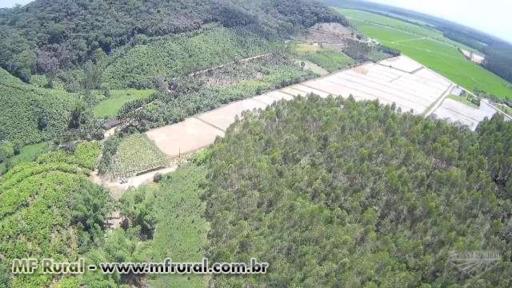 Vende-se Sitio / Area com Reflorestamento de Eucalipto