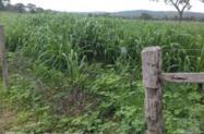 fazenda 131ha em buenopolis mg