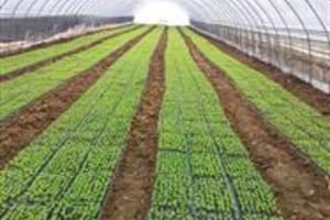 Mudas de hortaliças