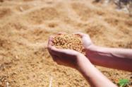 Vendo Saca de soja diretamente da agrícola