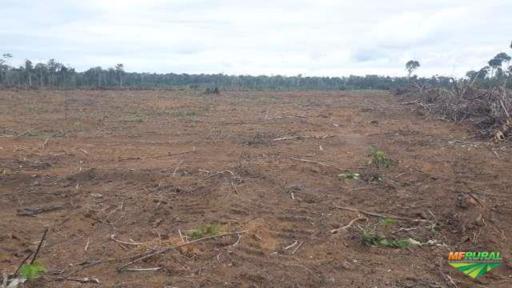 Fazendas em Santarém - Pa