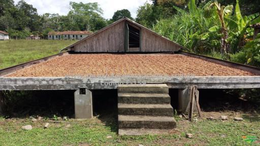 Fazenda Gado e Cacau