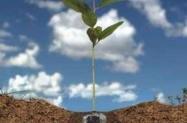 Gel para plantio de mudas - Hidrogel para plantas.