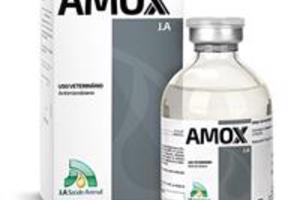 Amox J.A 50 mL