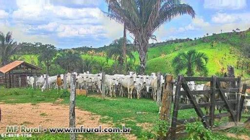 Fazenda 528 hectares