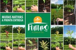 Mix de Mudas Nativas para recuperação ambiental