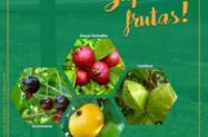 Mudas de Frutas Nativas da Mata Atlântica