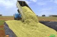 Venda de silagem de milho