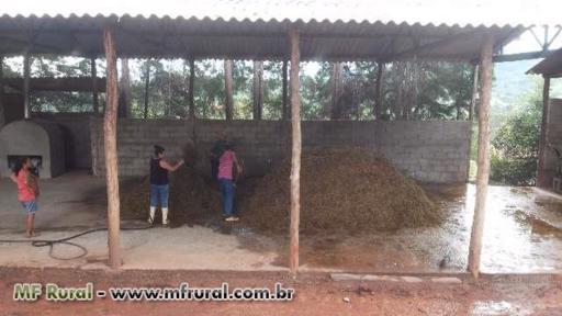Alimento para gado... Riquissimo ou adubo orgânico.