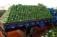melancia campinas carga