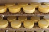 O melhor queijo do mundo