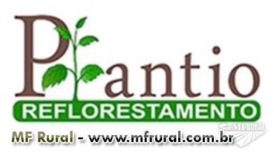 Prestação de serviço de reflorestamento
