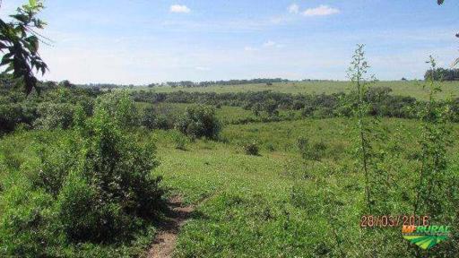 Fazenda com abundancia de água, margea ribeirão em 60% da propriedade.