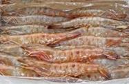 Camarão lagostim pitu rosa