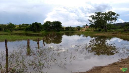 Fazenda Goiás Tocantins cria e recria para gado excelente pasto