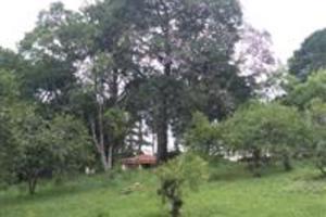 vendo sitio com pinos e eucaliptos