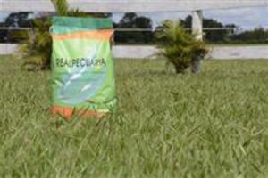 Sementes de grama Batatais