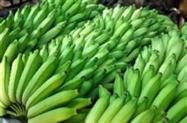 Banana prata e nanica