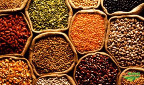 Compra e venda de sementes crotalaria capim