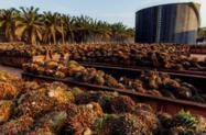 Óleo de palma refinado Biodiesel-Cosmético-alimento
