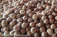 Fornecimento de coco seco