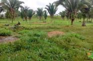 Fazenda 250Hc