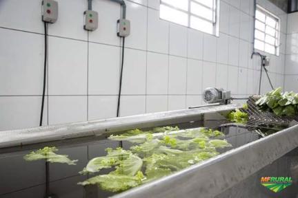 DIRETO DO PRODUTOR Legumes, verduras e tubérculos minimamente processados