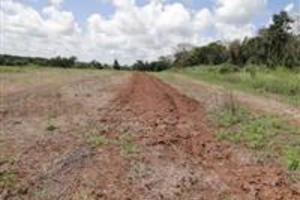 Arrendamento de Fazenda no Paraguay para Pecuária ( Criar, Recriar, Engordar 8.000 Cabeças de Gado )