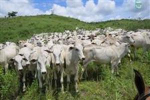 Gongogi. Fazenda 3.500,00 Hectare, ótima para pecuária