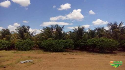 Fazenda com 100 hectares com produção de frutas.