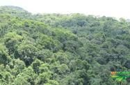 Área de Mata Nativa para compensação ambiental/ cumprimento de TAC imposto pelo MP