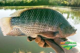 Transporte de Peixe Vivo