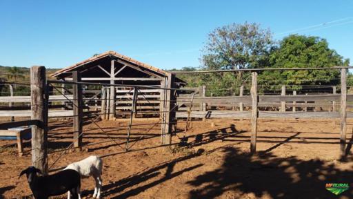 Fazenda em Arinos-MG