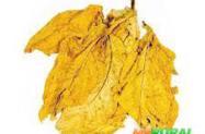 Tabaco Virgínia amarelinho