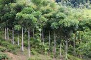 Plantio de Floresta