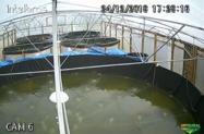 Laboratório de criação de alevinos de camarão e tilápia