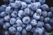 Blueberry  (Mirtilo)