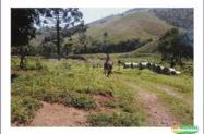 Fazenda em Joanópolis