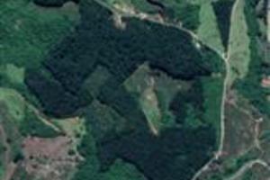 60 mil pés de eucalipto, 15 anos