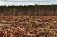 Área de 30O há de chapada 850 mt para plantação de eucalipto.