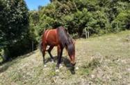 Cavalo/Égua/Pônei