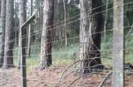 toras de pinos e eucaliptos.