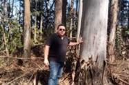 Eucalipto Salignas