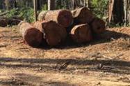 comprador de madeira mista