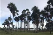 Fazenda em Muaná-Pa